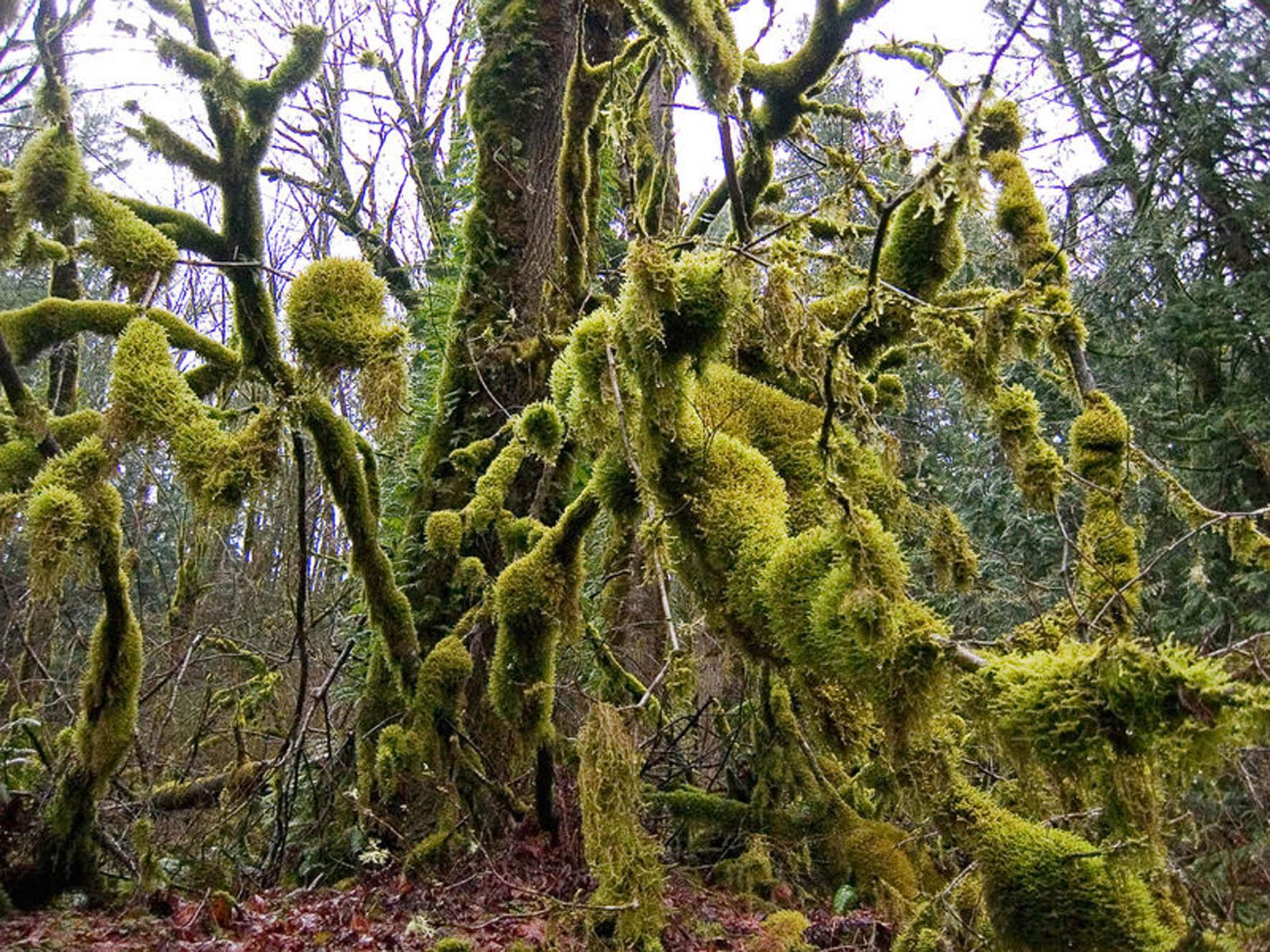 Fundamentales los musgos para capturar carbono y evitar for Plantas fundamentales