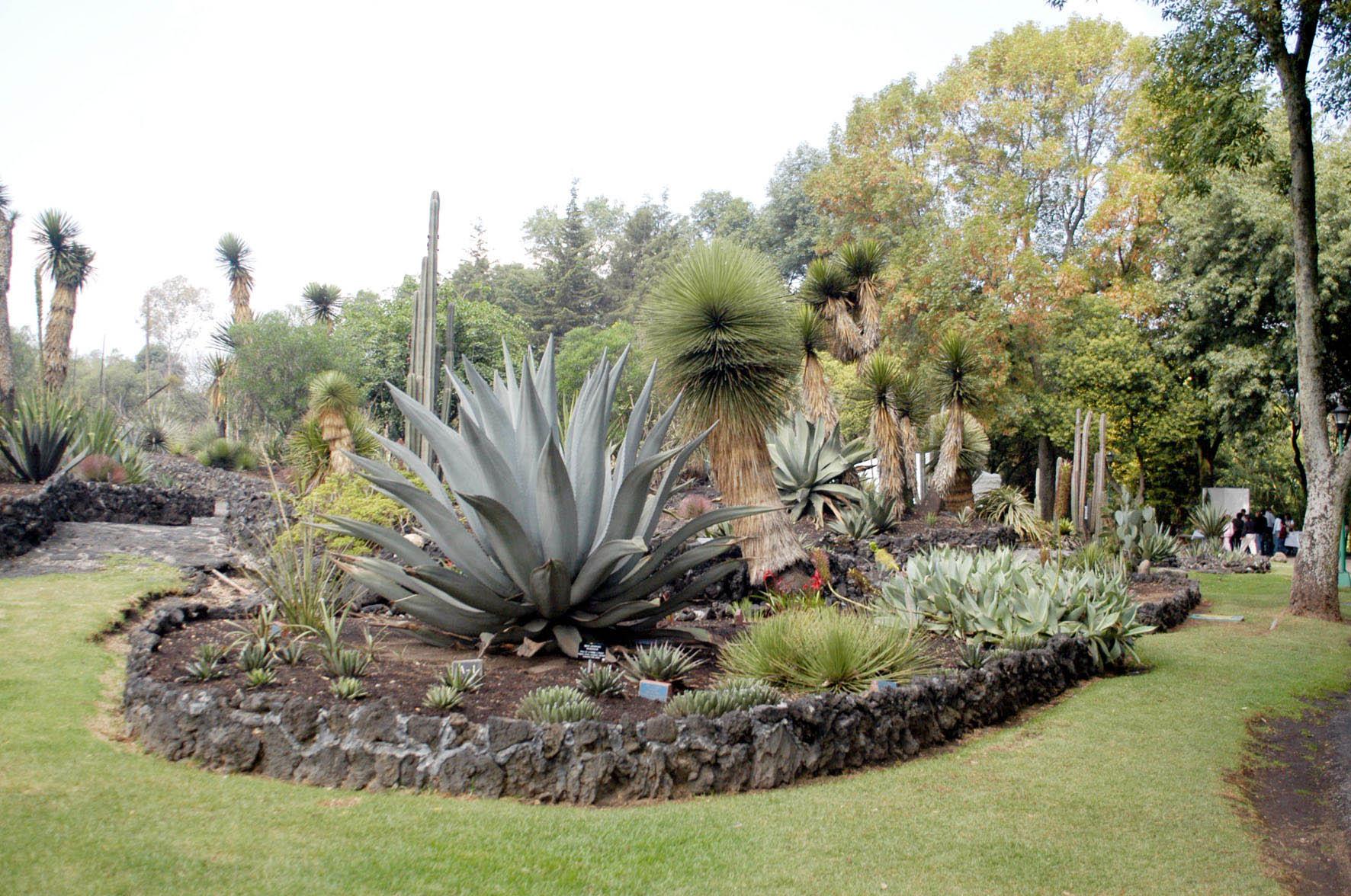 Amplia y creativa oferta vacacional en el jard n bot nico for Caracteristicas de un jardin botanico