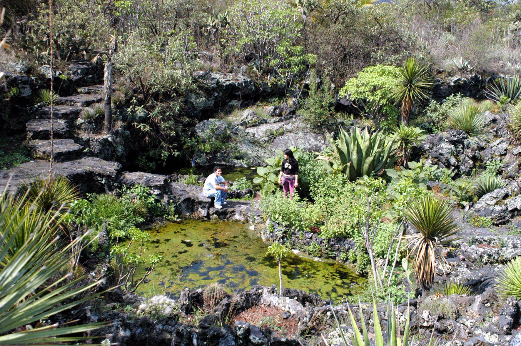 Amplia y creativa oferta vacacional en el jard n bot nico for Jardin botanico medicinal