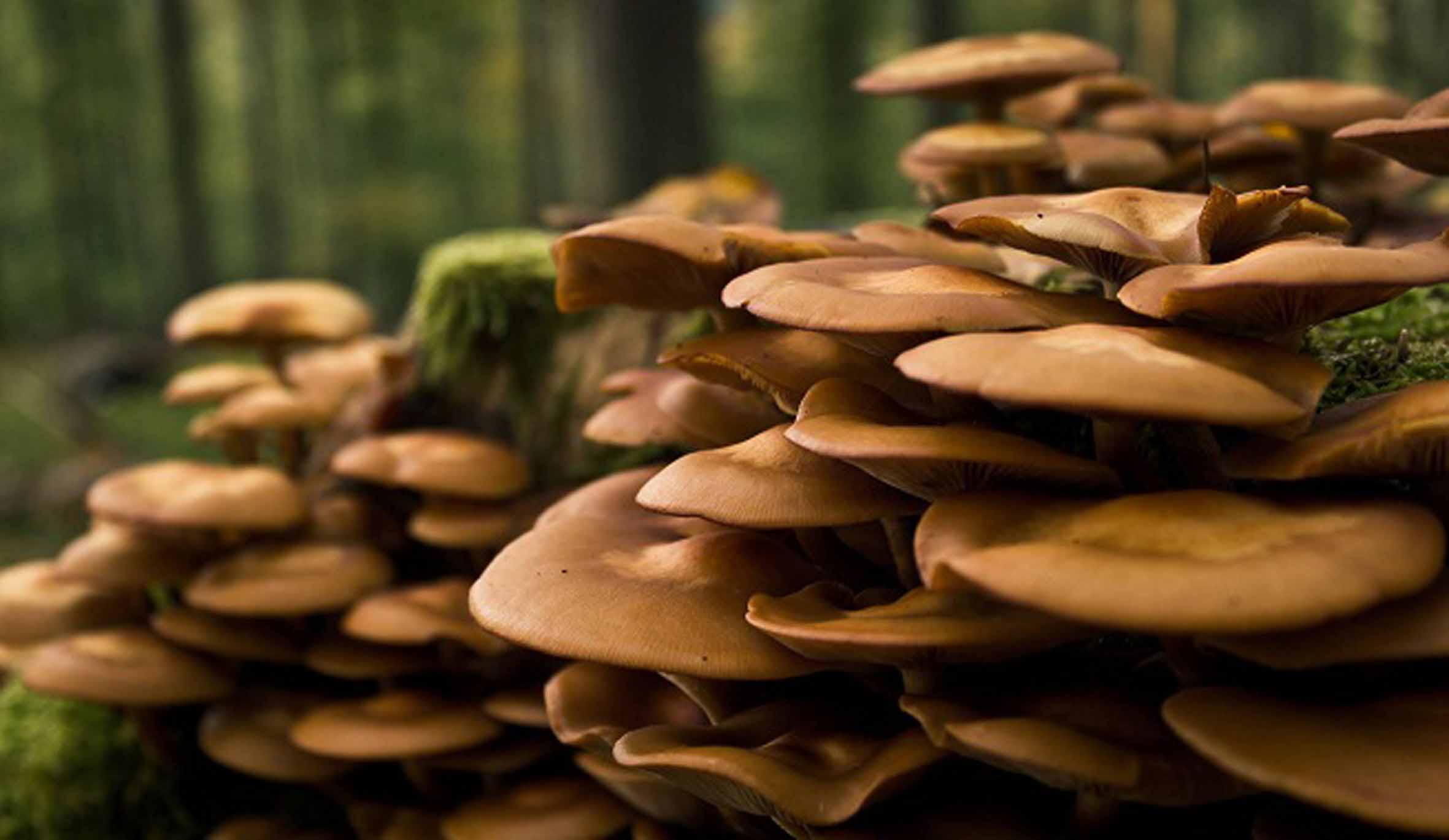 En m xico hay 250 mil especies de hongos - El moho es un hongo ...