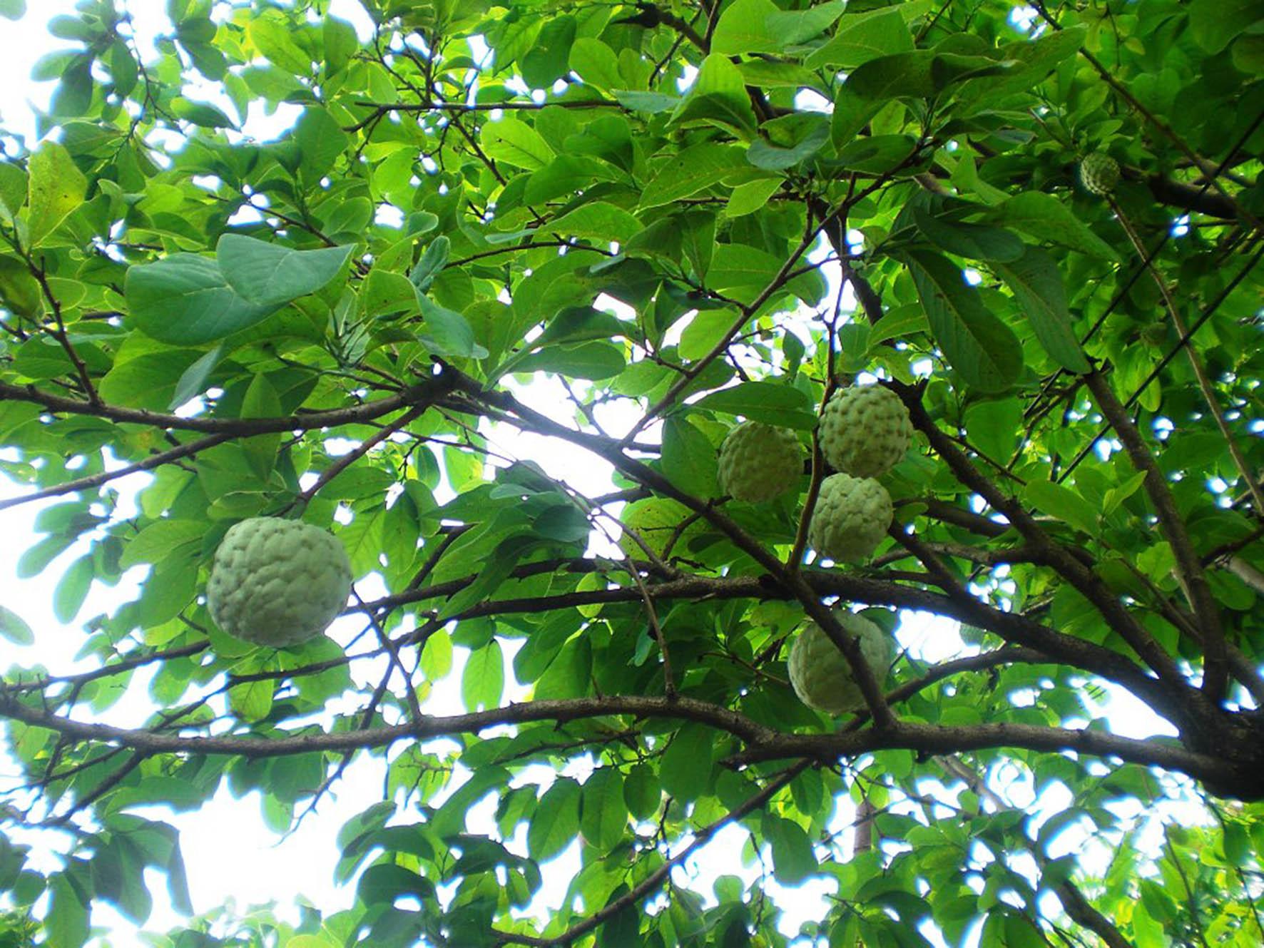 Identifican en la unam compuestos en plantas con potencial for Arboles de jardin que den sombra