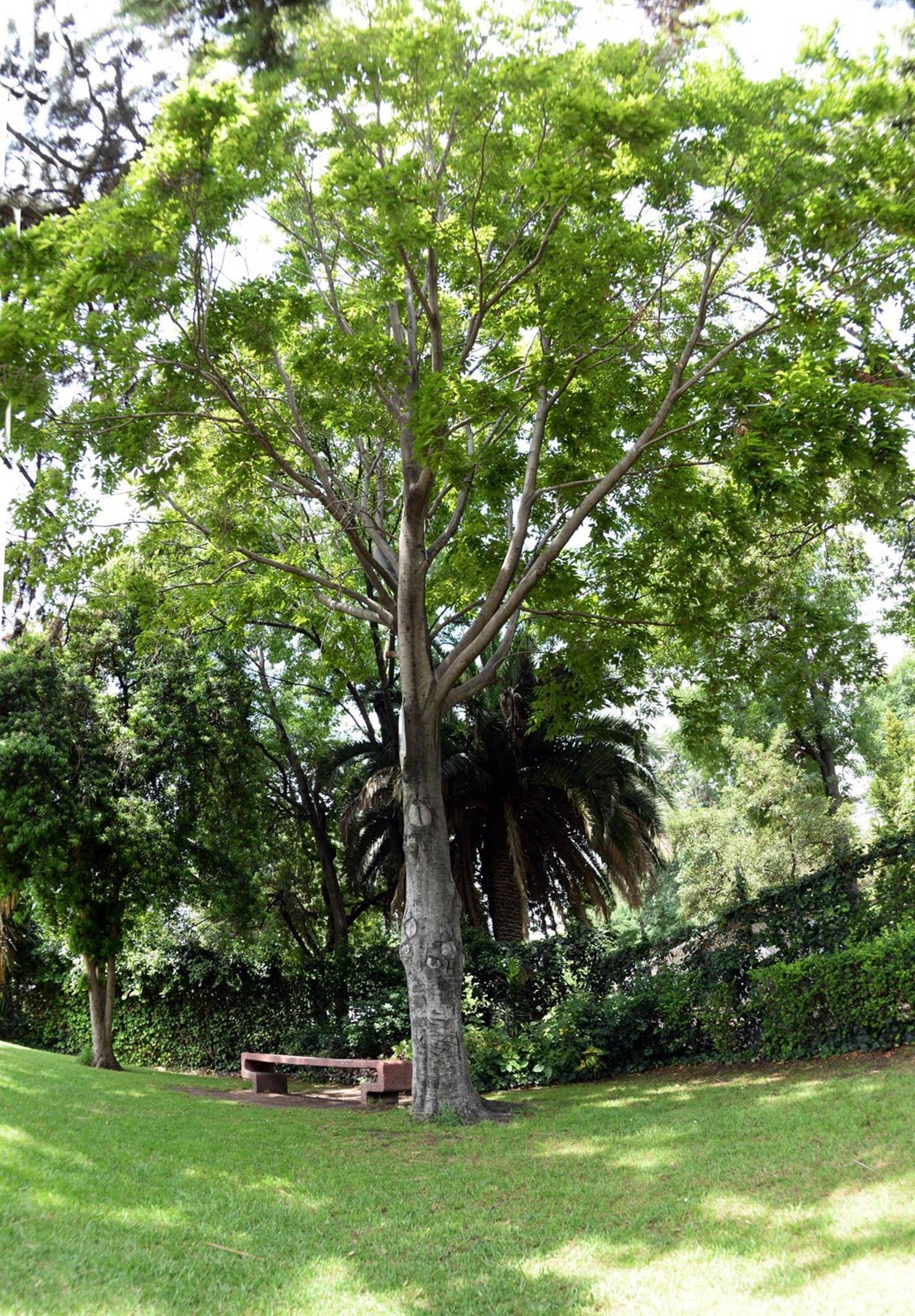 Produce la unam casi 65 mil plantas al a o para su demanda for Jardin botanico unam 2015