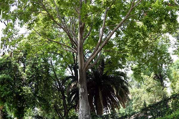 Produce la unam casi 65 mil plantas al a o para su demanda for Arboles del jardin botanico