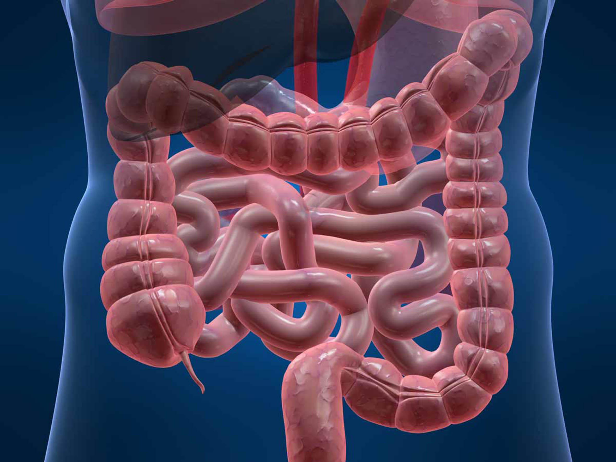 Vistoso Tracto Gastrointestinal Composición - Imágenes de Anatomía ...