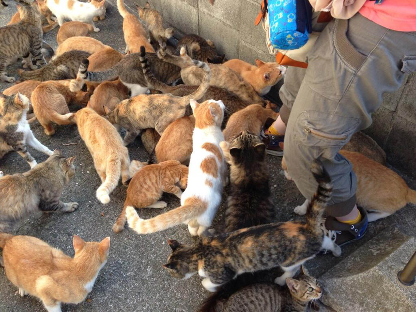 Un problema para la salud, el hacinamiento de animales en  departamentos urbanos: UNAM