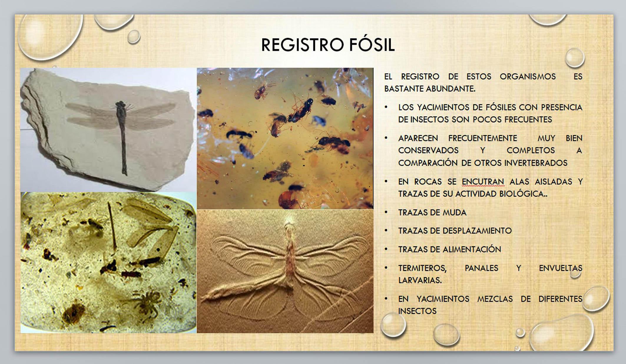 Sin insectos se acabarían gran parte de la flora y la fauna-UNAM