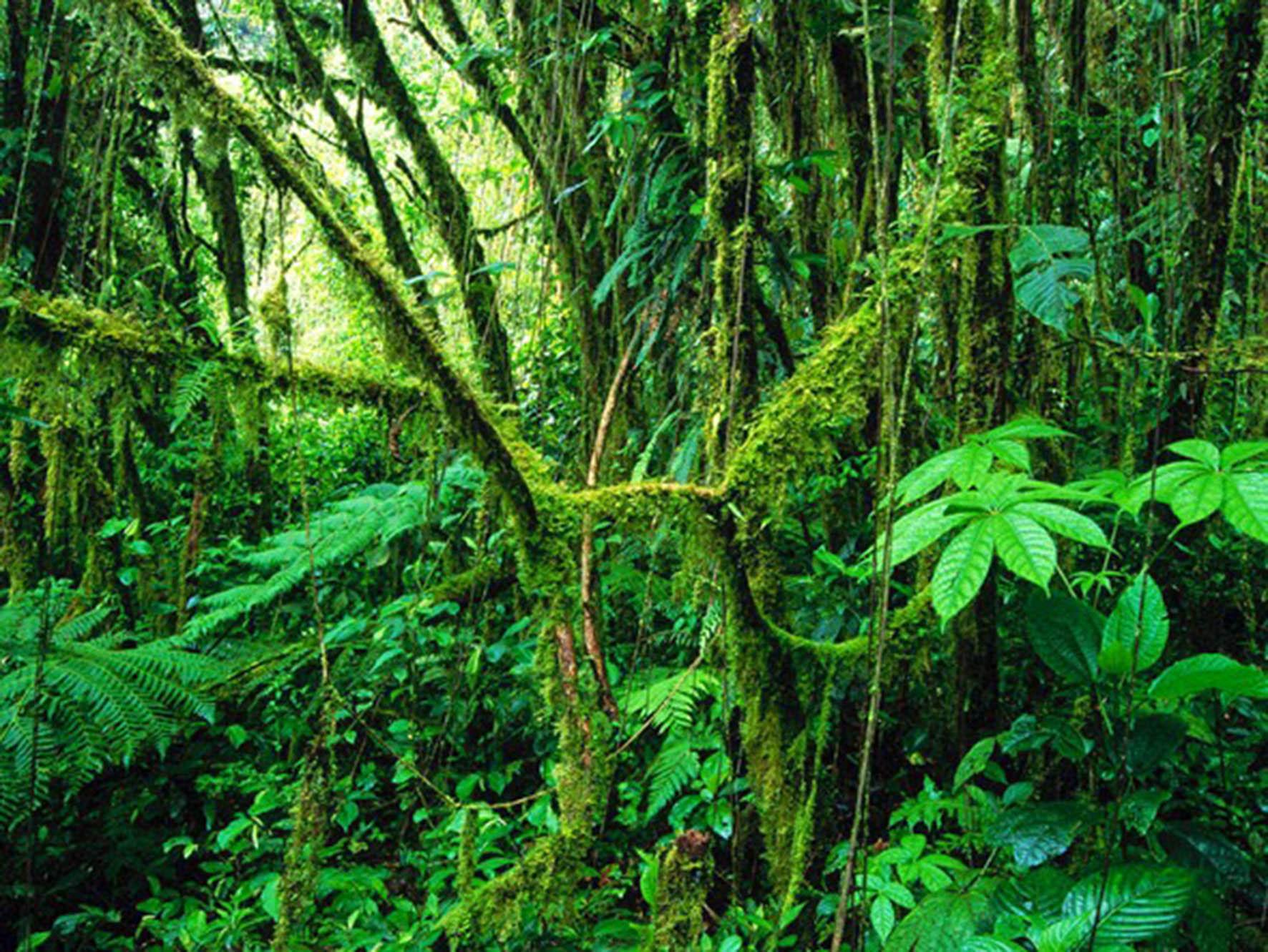 Las selvas tropicales jóvenes ayudan a mitigar el cambio climático-UNAM