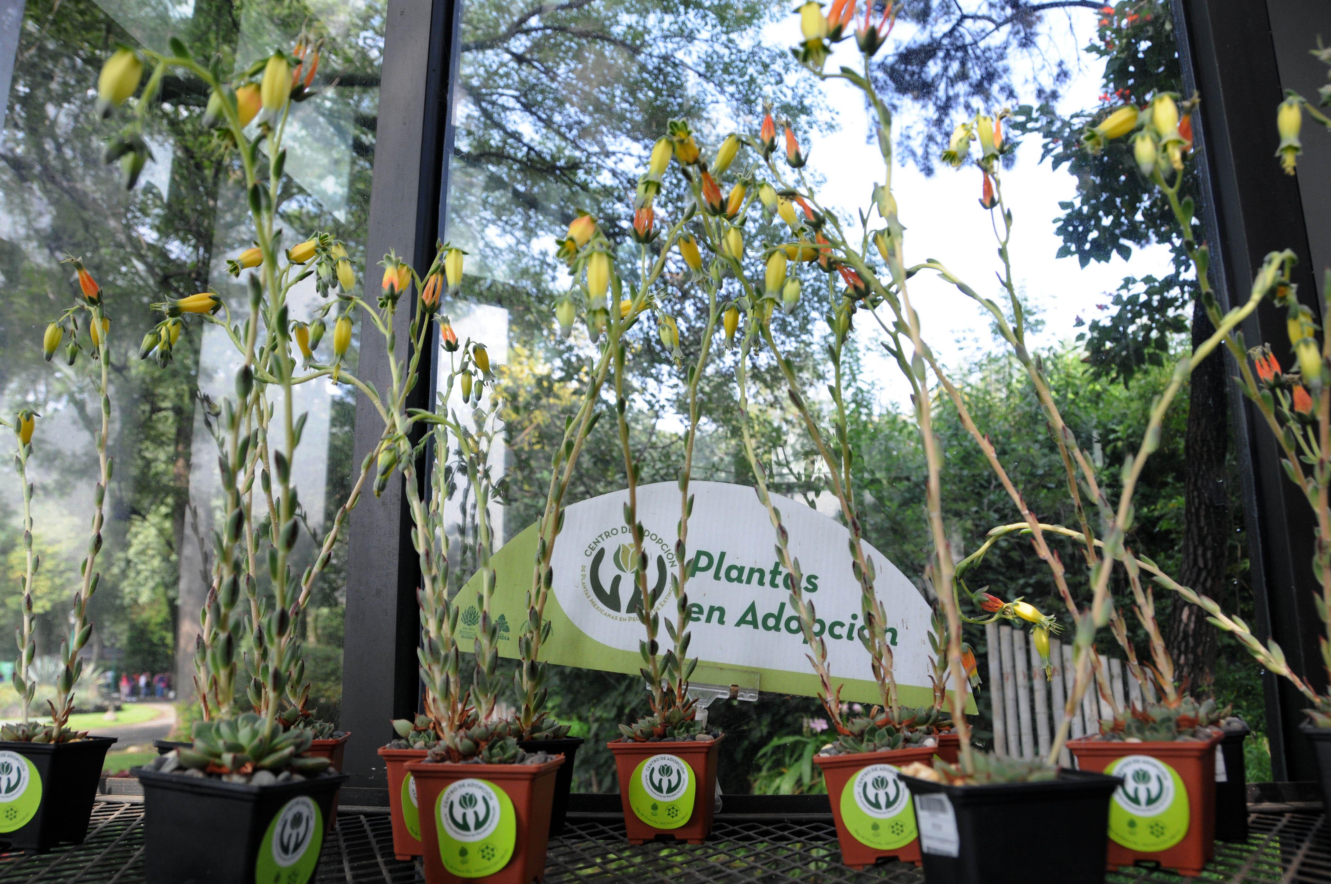 Cuenta la unam con 12 mil padres adoptivos de plantas for Jardin botanico unam 2015