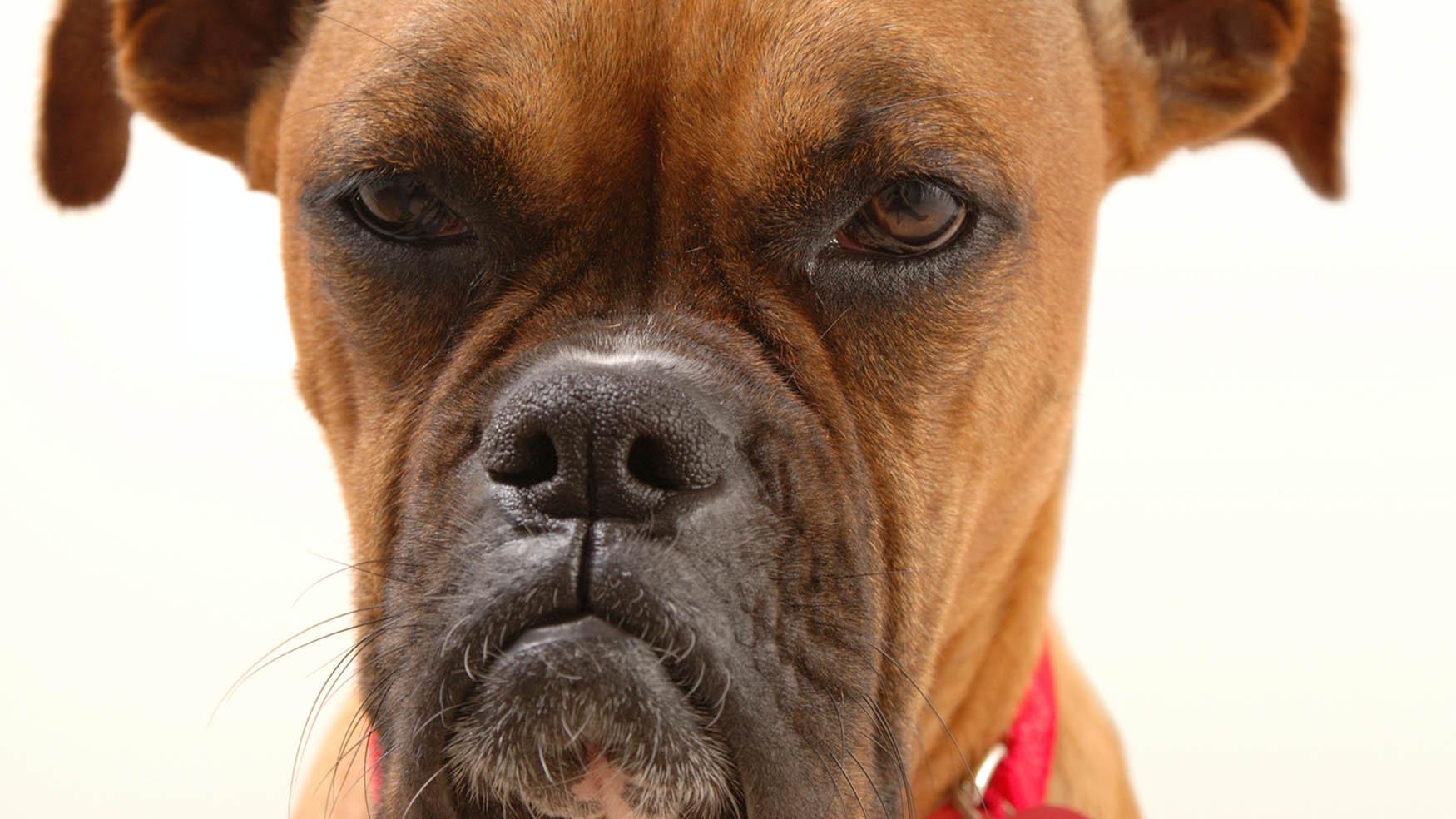 Ser permisivo o dominante con los perros puede volverlos agresivos